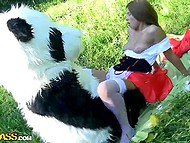 Unlike the wolf, salacious panda was going to fuck Little Red Riding Hood, not to eat 5