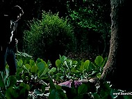 Sex symbol Antonio Banderas and Spanish actress Blanca Suarez starring in 'The Skin I Live In' movie 10