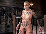 Tattooed bald woman enjoys powerful fucking machine nailing her pussy in different positions 10