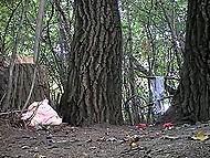 Tricky voyeur sets hidden camera in trees, where random girls often come to pee 5