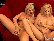 Luxurious ladies with massive hooters suck nipples and tease vaginas on red couch 11