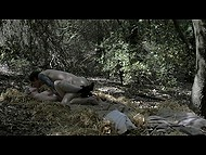 Hot scene out of a romantic movie shows how young lovers seclude in the woods for sex 8