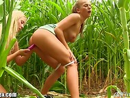 Hungry pusses were so aroused that couldn't resist and started to have lesbian love in the middle of the corn field
